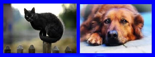 Katze.Hunde.Befoerderung.10.Jun17